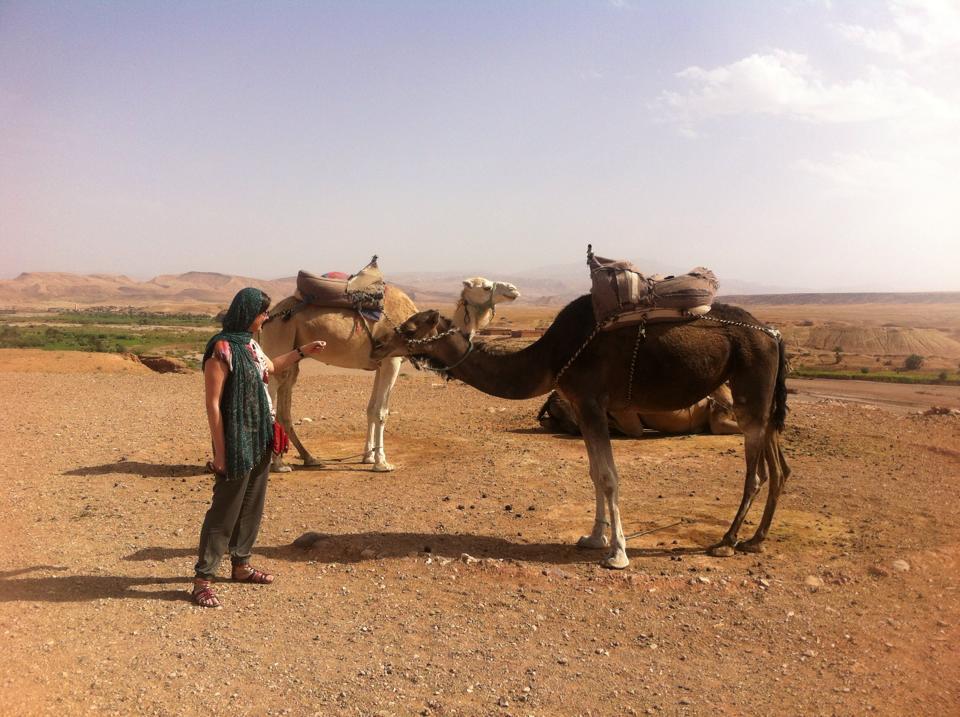 camels Ait Benhaddou