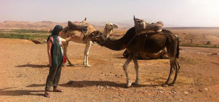Camels in Morocco