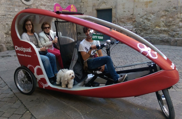 dog in car Barcelona