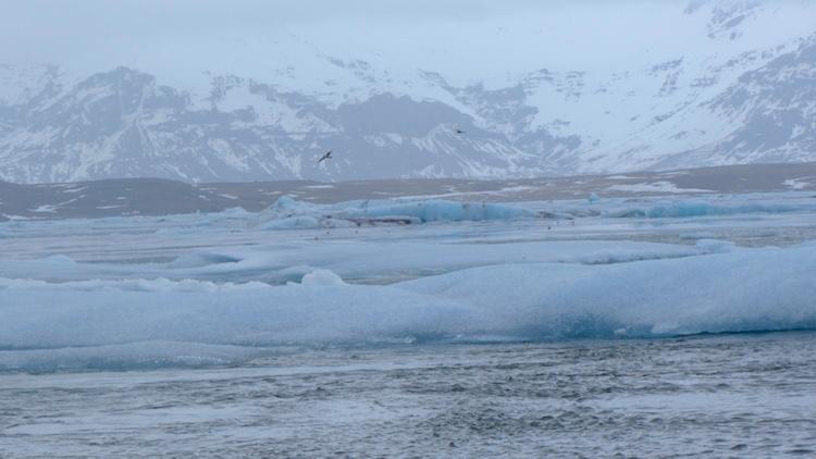 Jökulsárlón Glacier Lagoon bird life