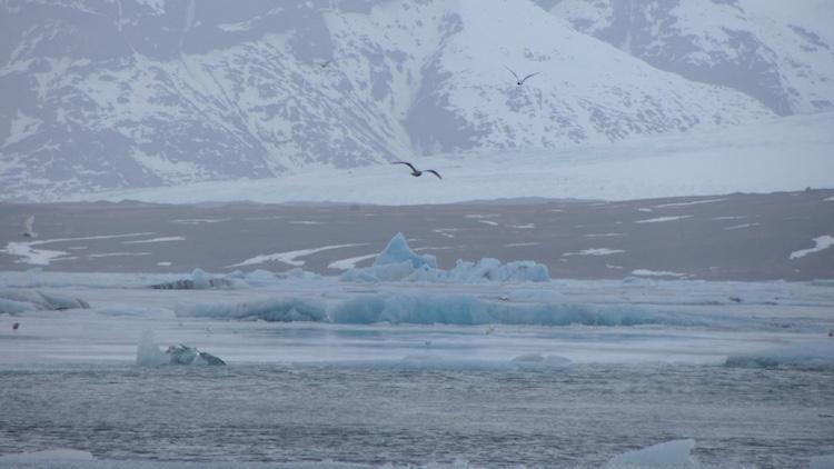 birds Jökulsárlón Glacier Lagoon