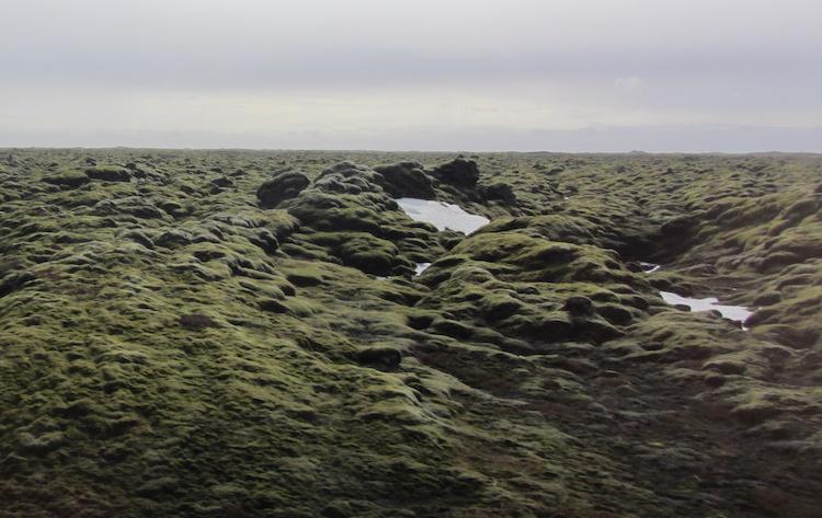 Lava fields South Iceland