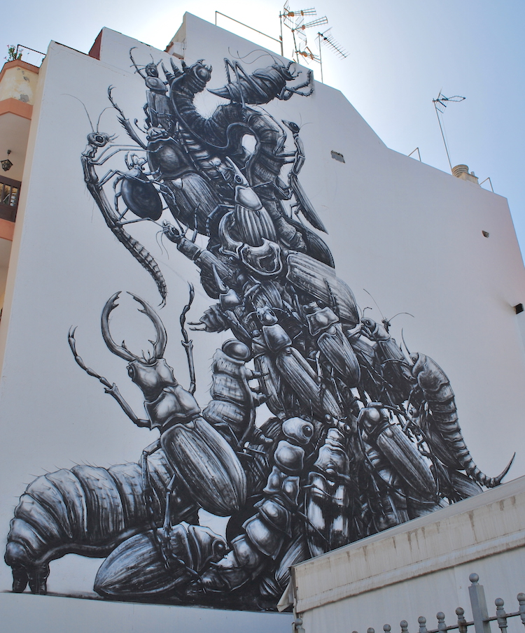 Black and White Insects by Roa