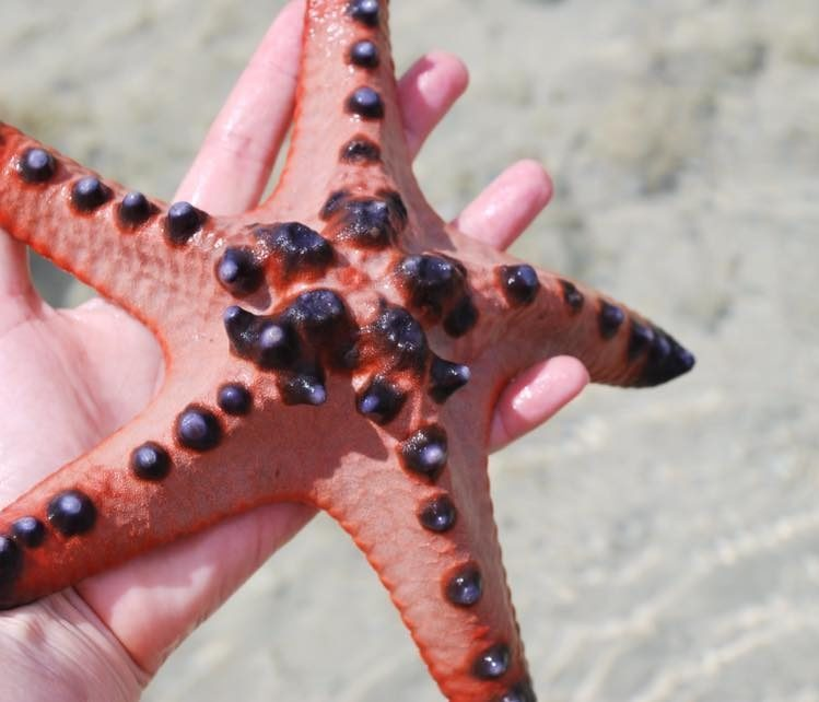 star-fish-island