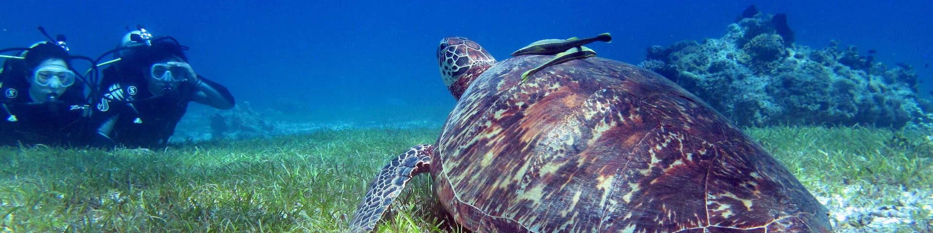 Scuba Diving Palawan