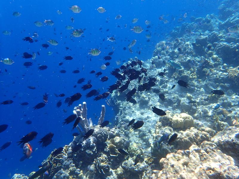 Scuba Diving in Coron