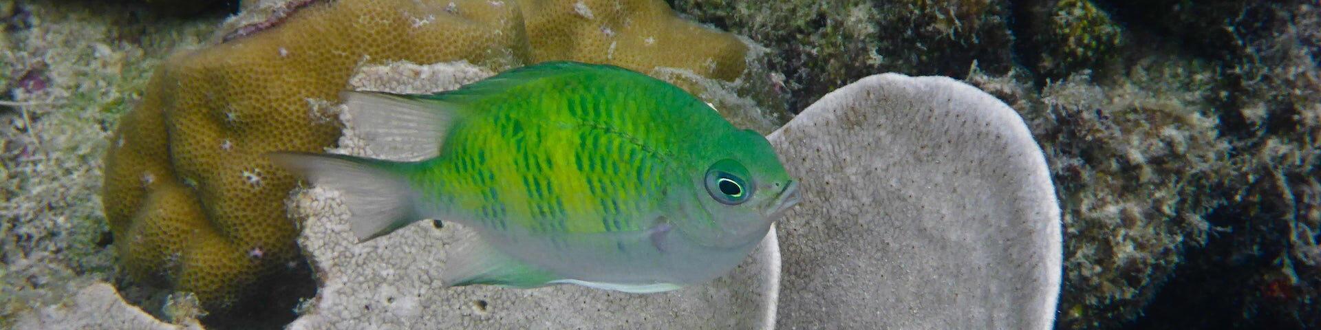 Scuba Diving Coron