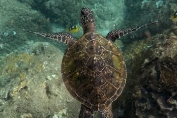 Snorkelling in Koh Lanta