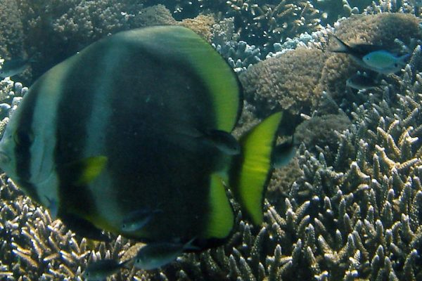 Southeast Asia Diving